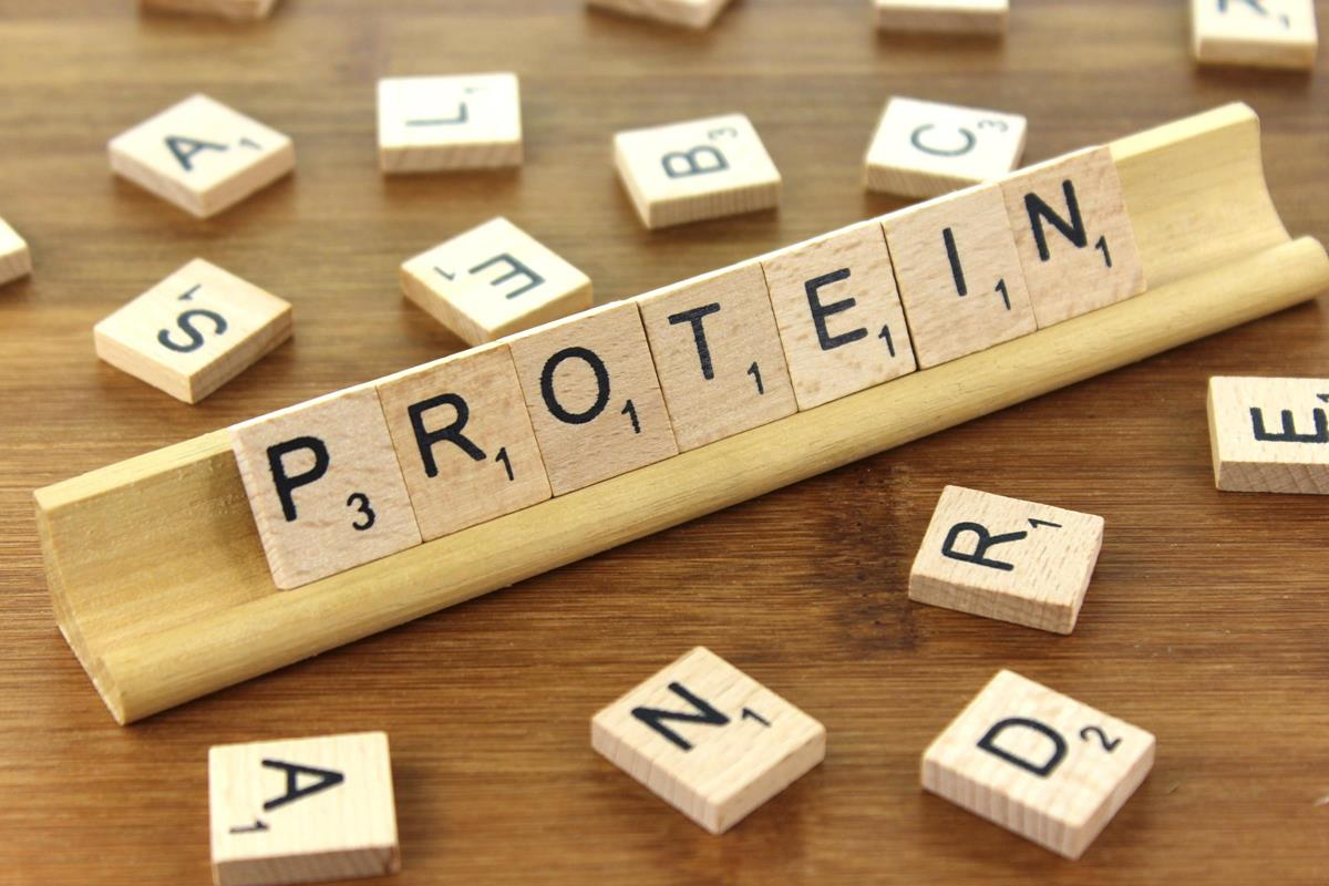 Protein